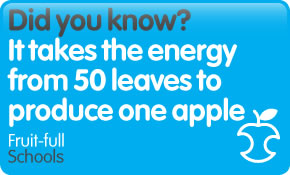 Did you know? It takes the energy from 50 leaves to produce one apple.