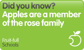 Did you know? Apples are a member of the rose family.